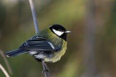 Vogel auf einer Niederlassung Stockfoto