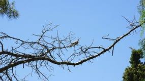 Vogel auf einer Niederlassung in den Gärten von Montjuic Stockfotografie