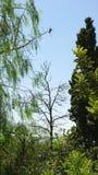 Vogel auf einer Niederlassung gegen den blauen Himmel Lizenzfreies Stockfoto