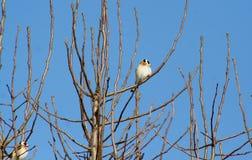 Vogel auf einer Niederlassung im Winter Lizenzfreie Stockfotos