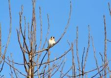 Vogel auf einer Niederlassung im Winter Lizenzfreies Stockbild