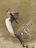 Vogel auf einer Palmen-Niederlassung Stockfotografie