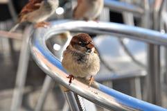 Vogel auf einer Rückenlehne in St Mark Quadrat, Venedig Lizenzfreies Stockfoto