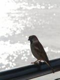 Vogel auf einer Schiene Stockfoto