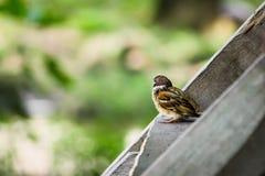 Vogel auf einer Treppe Stockfoto