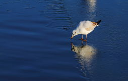 Vogel auf gefrorenem Fluss Lizenzfreie Stockfotografie