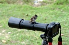 Vogel auf Kamera Stockfoto