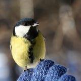 Vogel auf meiner Hand Stockbild
