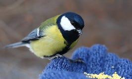 Vogel auf meiner Hand Lizenzfreies Stockbild