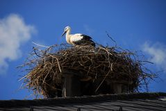 Vogel auf Nest lizenzfreie stockfotografie