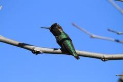 Vogel auf Niederlassung Lizenzfreies Stockfoto