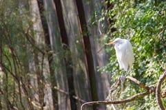 Vogel auf Niederlassung Lizenzfreie Stockfotografie