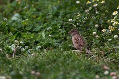 Vogel auf Niederlassung im Garten Stockbilder
