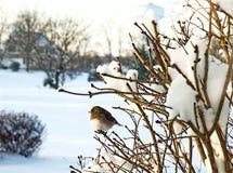 Vogel auf Niederlassung - Schnee-Sturm Stockfotografie