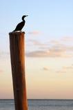 Vogel auf Pol Stockfotografie