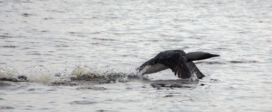 Vogel auf See Stockfotos