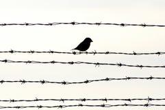 Vogel auf Stacheldraht Lizenzfreie Stockfotos