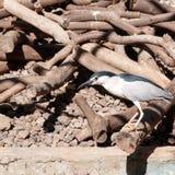Vogel auf trockenen Niederlassungen Lizenzfreies Stockbild