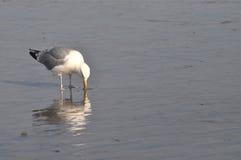 Vogel auf Ufer Lizenzfreies Stockfoto