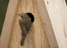 Vogel auf Vogelhaus stockfotos