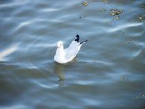 Vogel auf Wasser im daylighht Lizenzfreies Stockfoto