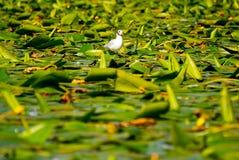 Vogel auf Wasser mit Anlagen Stockfoto