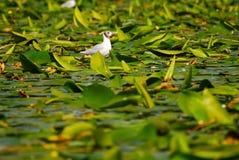 Vogel auf Wasser mit Anlagen Stockbild