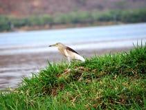 Vogel auf Wasserbank Lizenzfreies Stockbild