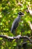 Vogel auf Zweig Stockfoto