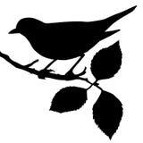 Vogel auf Zweig Lizenzfreies Stockfoto