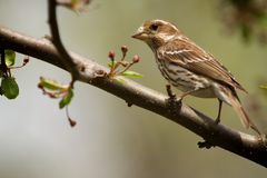 Vogel auf Zweig Stockbild