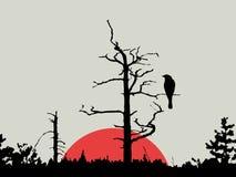 Vogel auf Zweig stockfotografie