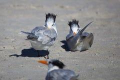 Vogel-Bäder Lizenzfreie Stockbilder