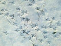 Vogel-Bahn-Abdrücke auf frischem weißem Schnee im Forest Winter Landscape Scenery Pattern-Weihnachtsneuen Jahr Gruß-Karten-Plakat Lizenzfreie Stockfotografie