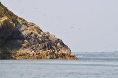 Vogel bedeckte den Felsen, der in das Meer fällt Stockfotos