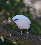 Vogel bei Chester Zoo, Cheshire Stockfotografie