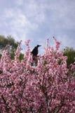 Vogel bij de bovenkant van boom Stock Foto