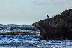 Vogel bij de zonsondergang Stock Foto's