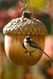 Vogel bij Haar Nest Royalty-vrije Stock Foto's
