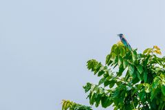 Vogel bij het zitten op boomtak stock fotografie