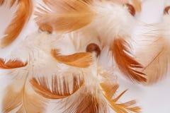 Vogel boho Beschaffenheits-Traumfliege stockbild