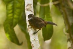 Vogel in boom die camera bekijken Royalty-vrije Stock Foto