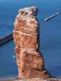 Vogel colonie op het zeeeiland Helgoland Stock Afbeeldingen