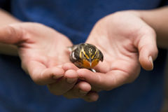 Vogel in de Hand Royalty-vrije Stock Foto's