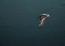 Vogel de jacht Royalty-vrije Stock Fotografie