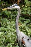 Vogel de jacht voor vissen Royalty-vrije Stock Foto