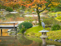 Vogel in de Japanse tuin in de Herfst, Seattle Royalty-vrije Stock Fotografie