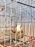 Vogel in de kooi Stock Foto