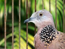 Vogel in de kooi Royalty-vrije Stock Foto