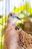 Vogel in de kooi Royalty-vrije Stock Foto's